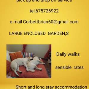 Short and long term dog accommodation